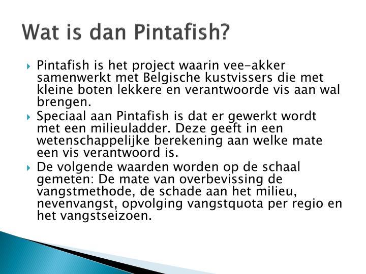 Wat is dan Pintafish?