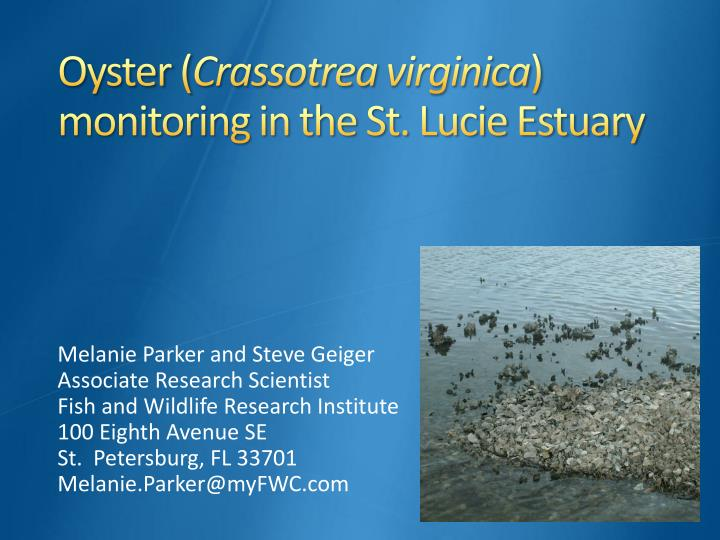 oyster crassotrea virginica monitoring in the st lucie estuary n.