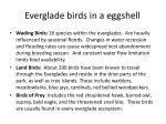 everglade birds in a eggshell