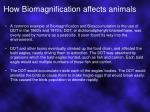 how biomagnification affects animals