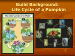 build background life cycle of a pumpkin