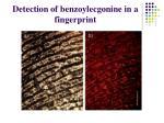 detection of benzoylecgonine in a fingerprint