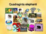 quadraginta elephanti