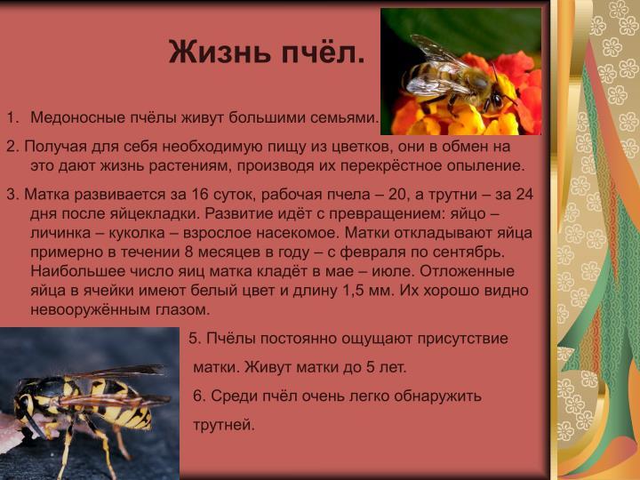 Жизнь пчёл.