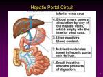 hepatic portal circuit