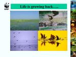 life is growing back