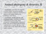 animal phylogeny diversity ii