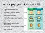 animal phylogeny diversity iii