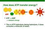 how does atp transfer energy