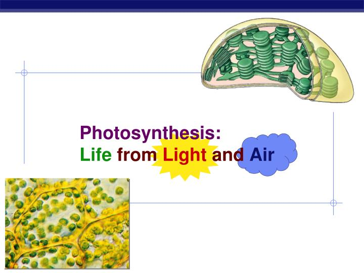 photosynthesis life from light and air n.