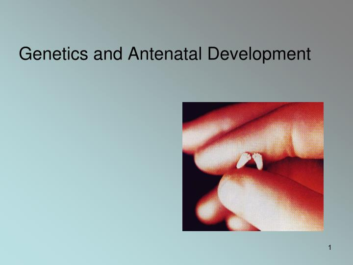 genetics and antenatal development n.
