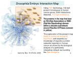 drosophila embryo interaction map