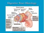 digestive tract histology