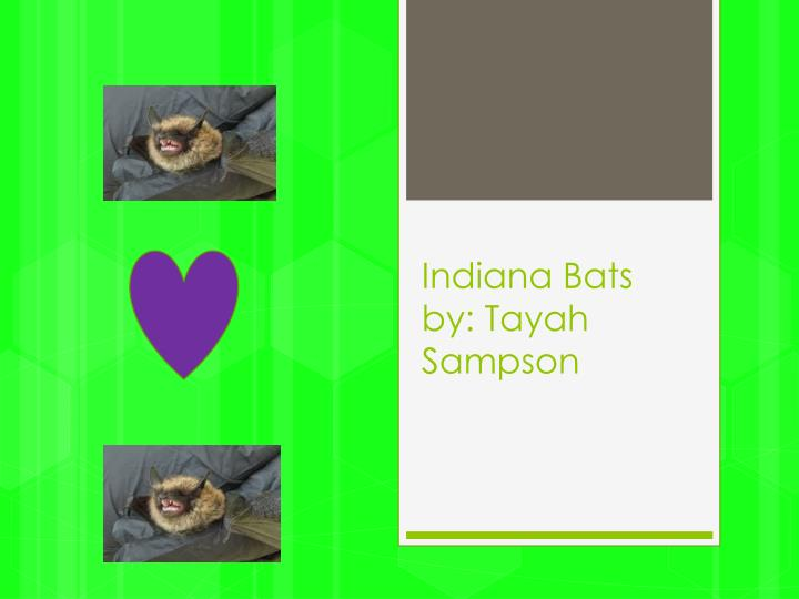 indiana bats by tayah s ampson n.