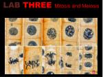 lab three mitosis and meiosis