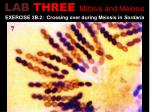 lab three mitosis and meiosis4