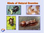 kinds of natural enemies