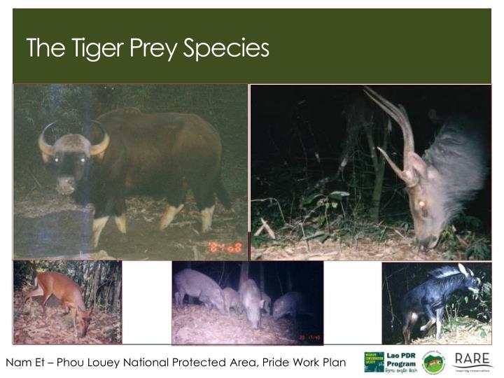 The Tiger Prey Species