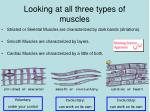 looking at all three types of muscles