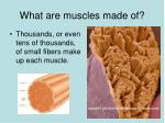 what are muscles made of