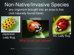 non native invasive species