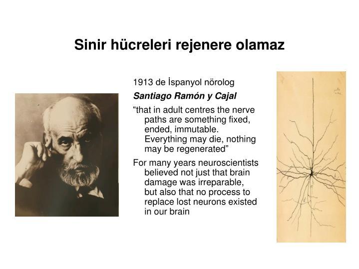 Sinir hücreleri rejenere olamaz