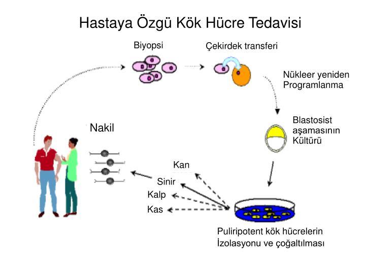 Hastaya Özgü Kök Hücre Tedavisi