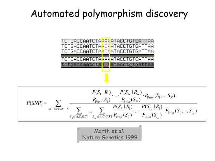 Automated polymorphism discovery