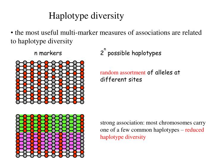 strong association: most chromosomes carry one of a few common haplotypes –