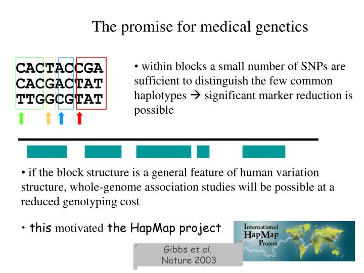 if the block structure is a general feature of human variation structure, whole-genome association studies will be possible at a reduced genotyping cost