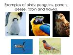 examples of birds penguins parrots geese robin and hawks