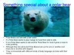 something special about a polar bear