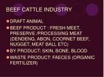 beef cattle industry