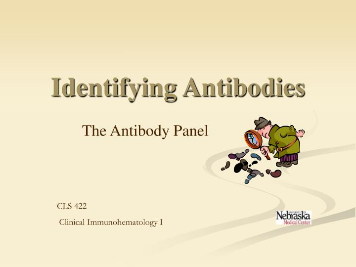 identifying antibodies n.