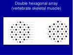 double hexagonal array vertebrate skeletal muscle