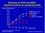 blockade of vegf and her2 significant effects on xenograft growth