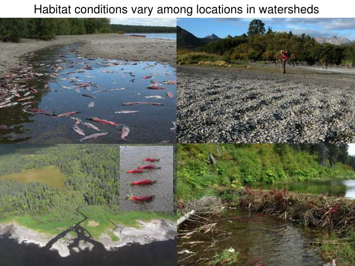 Habitat conditions vary among locations in watersheds