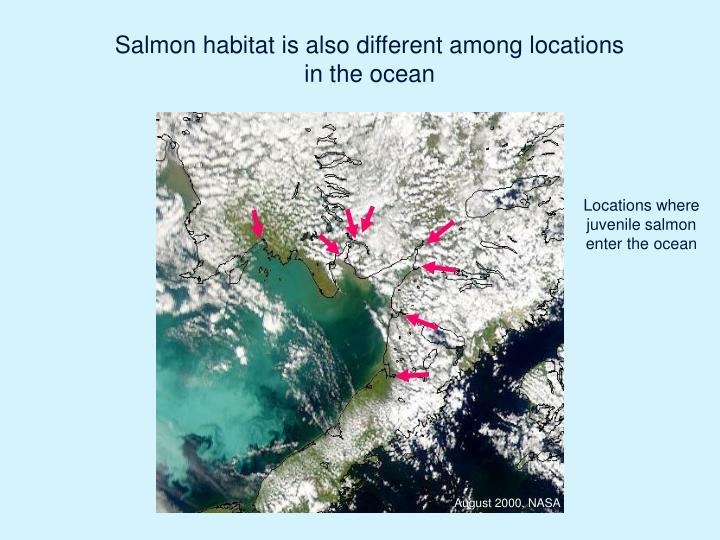Locations where juvenile salmon enter the ocean