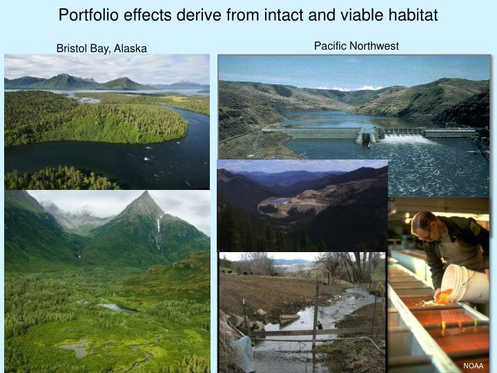 Portfolio effects derive from intact and viable habitat