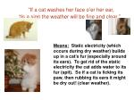 if a cat washes her face o er her ear tis a sign the weather will be fine and clear1