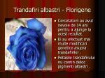 trandafiri albastri florigene
