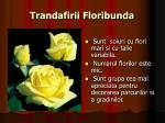 trandafirii floribunda