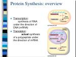 protein synthesis overview
