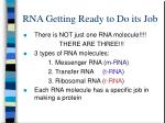 rna getting ready to do its job