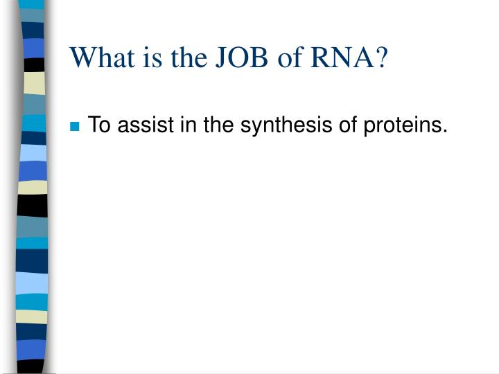 What is the JOB of RNA?