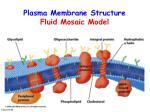 plasma membrane structure fluid mosaic model