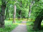 reducerea suprafe ei p durilor n general a fondului forestier proprietate public este interzis