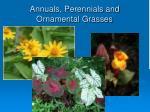 annuals perennials and ornamental grasses