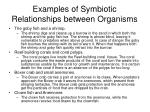 examples of symbiotic relationships between organisms