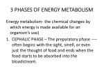 3 phases of energy metabolism